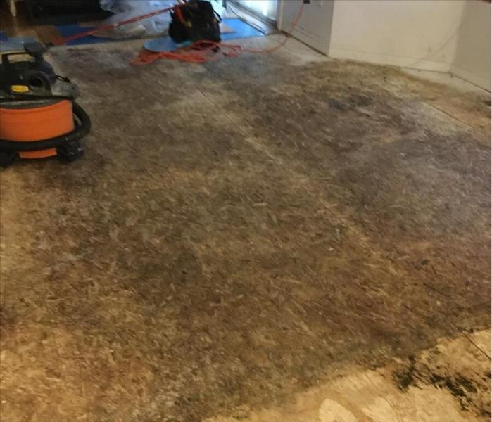 Wood Floors With Mold Growth After