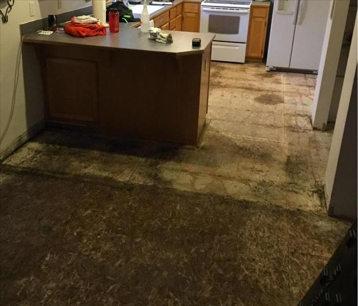 Microbial Growth on Kitchen Floor