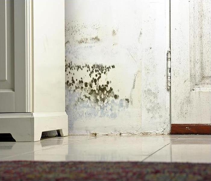 Mold Remediation Mold In Hard-To-Reach Places